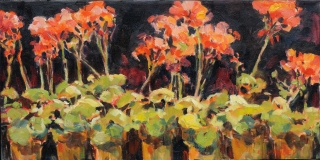 Geraniums in Terracotta Potts by Lucy Manley